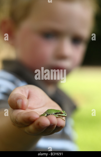 Young boy holding small tree frog - Stock Image