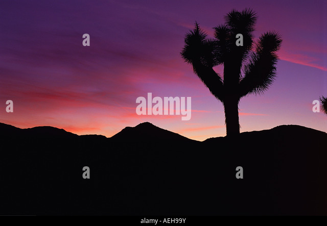 Joshua Tree desert at sunset. - Stock Image