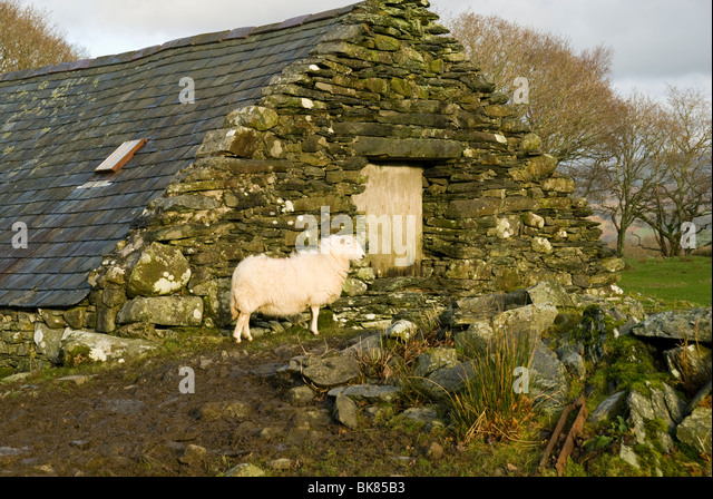 An ancient bank barn (split level barn) near Dolgellau, Snowdonia, North Wales, UK - Stock Image