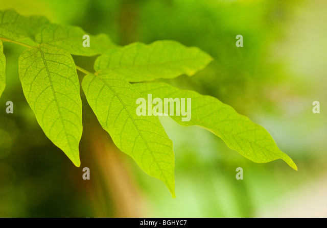 green leaf background with selective focus - Stock-Bilder