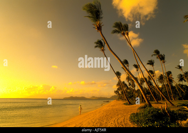 Pinneys Beach, Nevis, with idyllic tropical setting of palm trees and placid calm water, Pinney's Beach, Nevis, - Stock Image