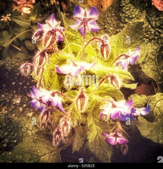 Flowering medley - Stock Image