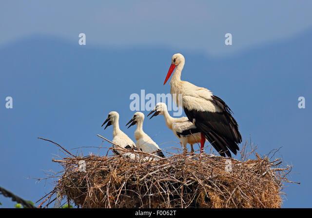 baby stork stock photos amp baby stork stock images alamy