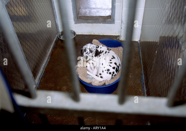 dog in a kennel Newcastle England - Stock Image