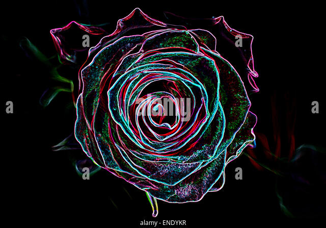 Abstract background made of rose flower, glowing neon style. - Stock Image