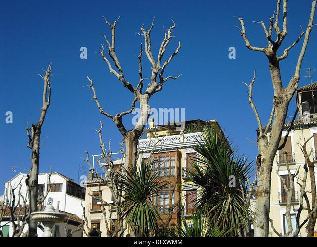 Granada city centre stock photos granada city centre for Arboles de hoja caduca