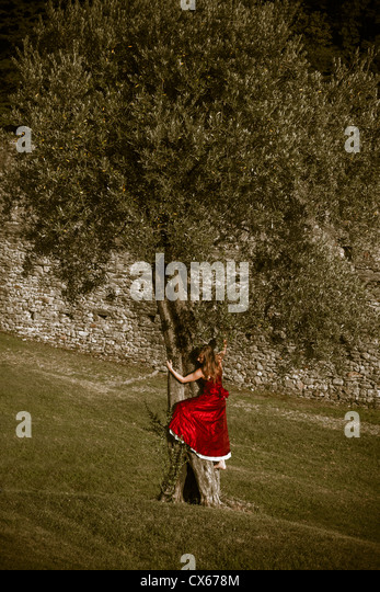 a woman in a red dress is climbing up an olive tree - Stock Image
