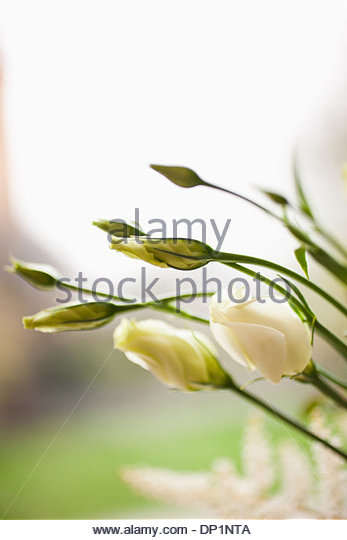 Flowers beginning to bloom - Stock Image