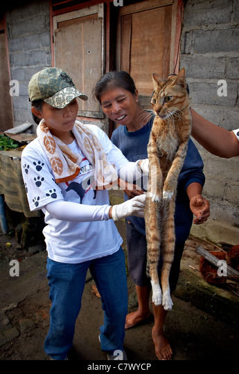 Vaccinating a cat in Bali against the rabies virus - Stock Image