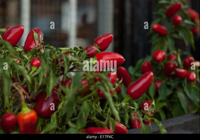 Capsaicin Stock Photos & Capsaicin Stock Images - Alamy