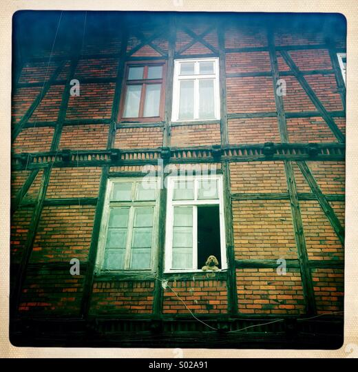 A dog is seen gazing out the window of an old house in an area known as Little London in Bydgoszcz, Poland. - Stock Image