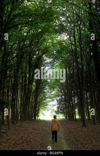 Young boy walking through a tree-lined path through woodland in Dorset, UK - Stock Image