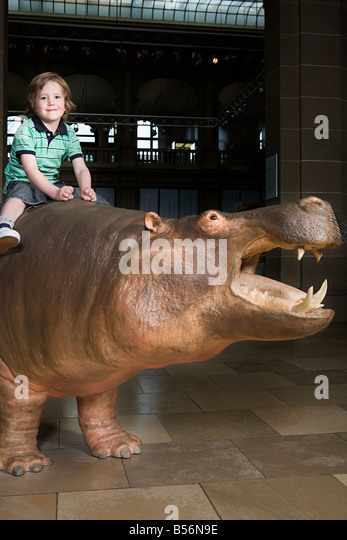Boy sitting on a rhino in a museum - Stock Image