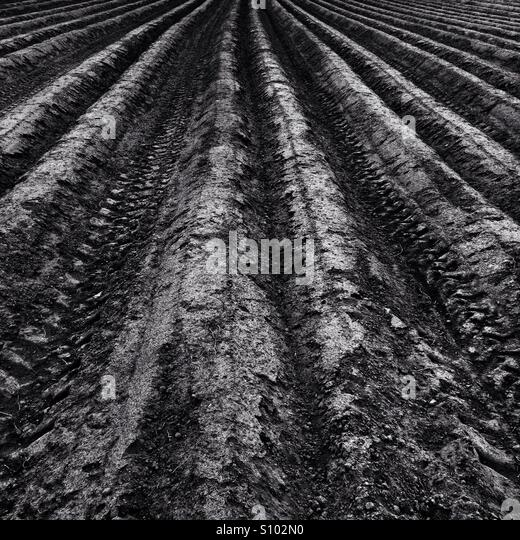 Field lines - Stock Image