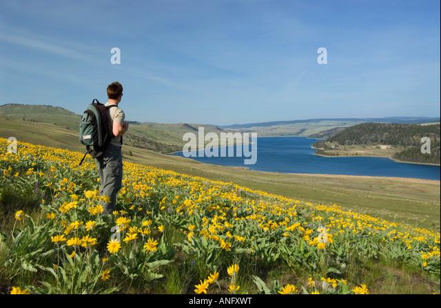 A young man surveys the landscape while hiking at Stump Lake, near Kamloops, British Columbia, Canada. - Stock Image