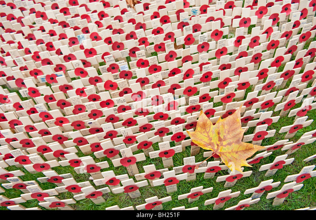 An autumn leaf surrounded by small crosses and poppies at the Field of Remembrance at Westminster Abbey, London - Stock Image