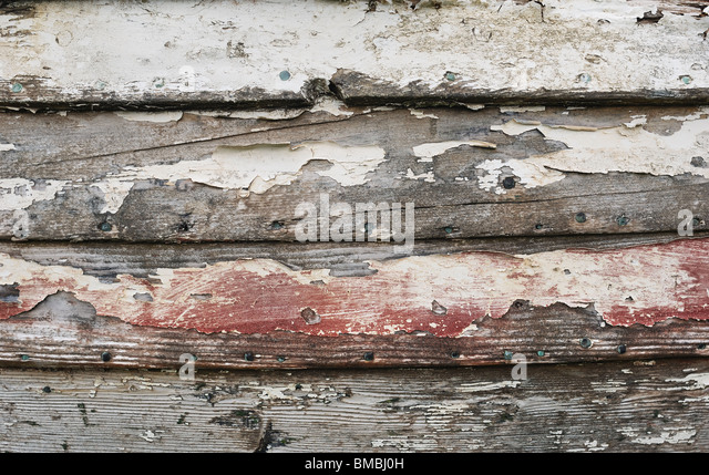 Decaying Wood - John Gollop - Stock Image
