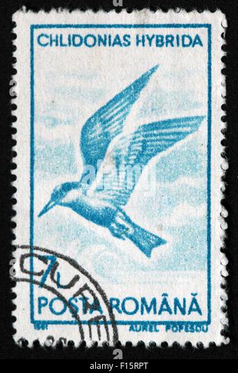 Romana Chlidonias Hybrida 7 bird Stamp - Stock Image