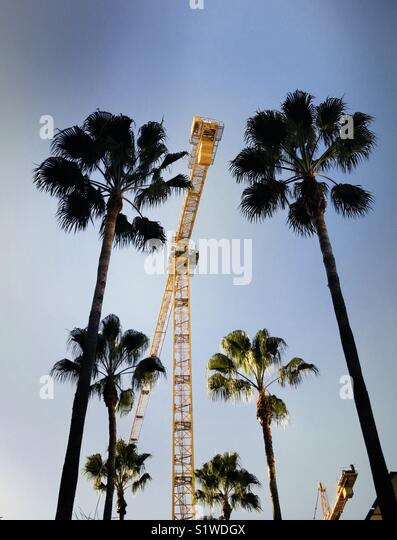Palm trees and construction chains. Los Angeles, California USA. - Stock Image