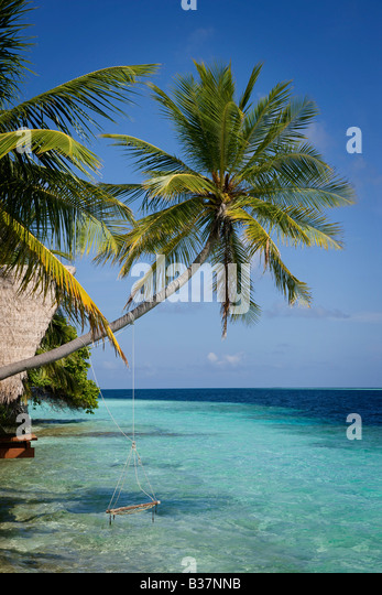 Rope swing on South Ari Atoll in Maldives near India - Stock Image