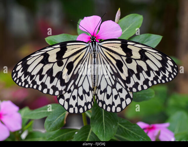 Close-Up Of Butterfly On Flower Outdoors - Stock Image