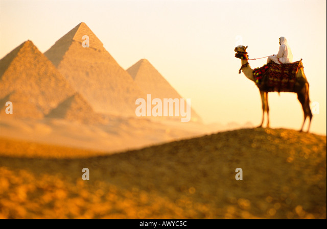 Camal and pyramids Giza Cairo Egypt - Stock Image
