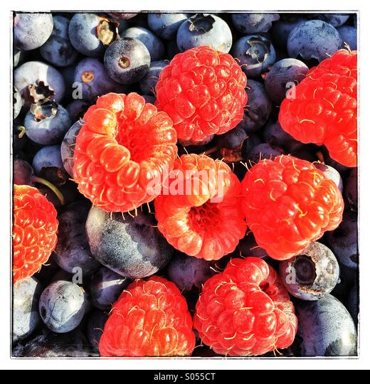 Fresh picked blueberries and raspberries. - Stock Image