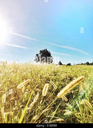 Summer grassland - Stock Image