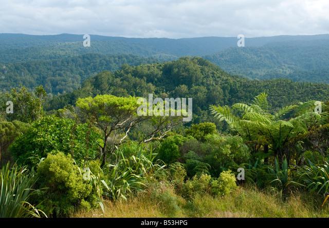 Waipoua Kauri Forest, North Island, New Zealand - Stock Image