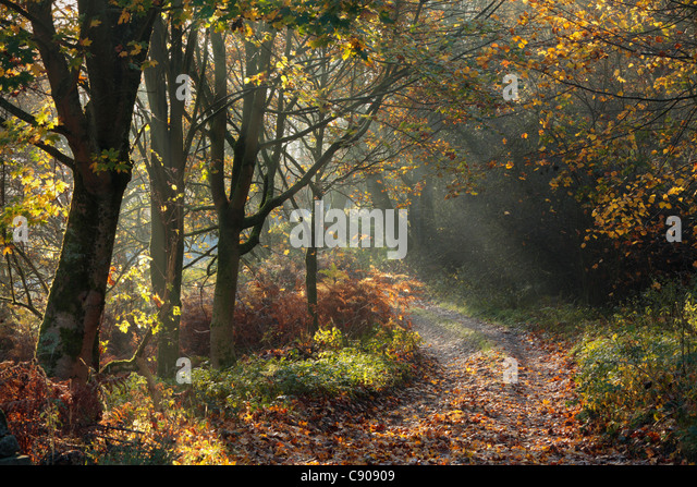 Rays of sunlight shine through autumn leaves onto a trail near Barden in Wharfedale, Yorkshire - Stock Image