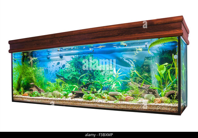 Aquarium algae plant stock photos aquarium algae plant for White algae in fish tank
