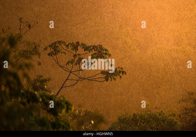 A rain shower over the forest at Sunset - Stock Image