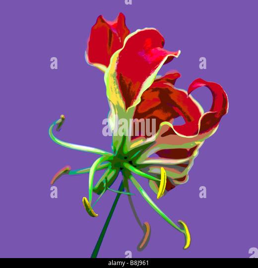 GLORIOSA ROTHSCHILDIANA AGAINST PLAIN BACKGROUND POSTERISED - Stock Image
