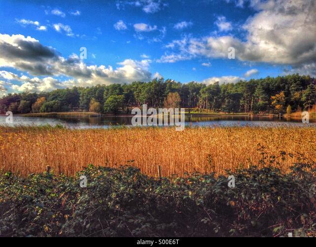 Lake scene - Stock Image