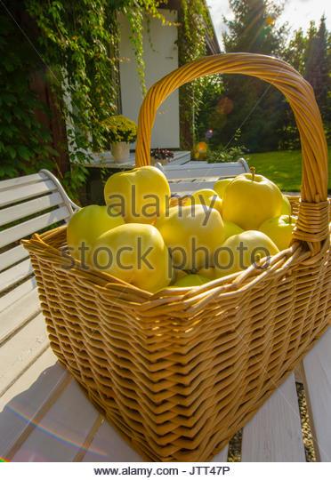 Apple basket in autumn - Stock Image