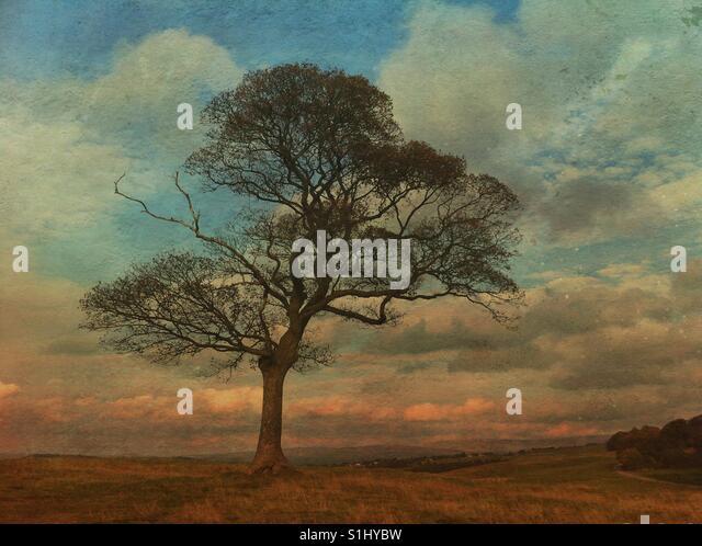 Lone tree - Stock-Bilder