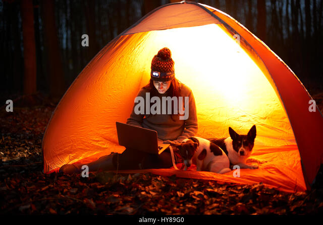 A woman sits in a tent at night with her dogs and looks at her laptop - Stock Image