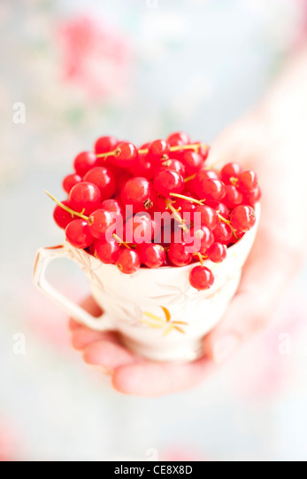 MODEL RELEASED. Red currants in a cup. - Stock Image