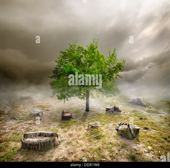 Green tree among the stumps in cloudy day - Stock Image