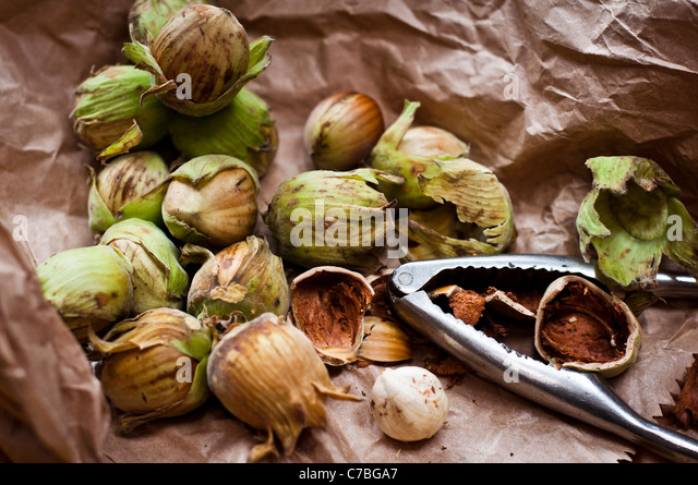 Fresh whole Kentish cobnuts with nutcrackers on brown paper bag - Stock Image