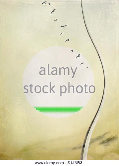 birds flying sun - Stock Image