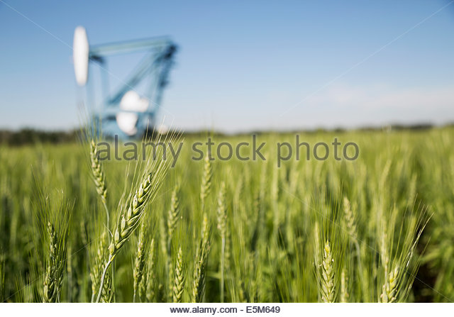 Oil well in background of green wheat field - Stock-Bilder