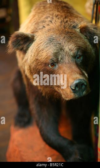 Bear - Stock-Bilder