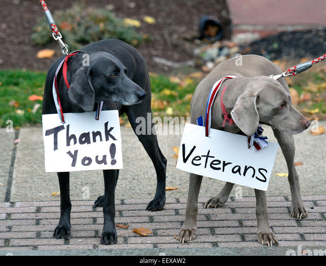 Milford CT USA  Weimaraners, 'Kona,' left and ' Kailua' show their family's patriotism at the - Stock Image