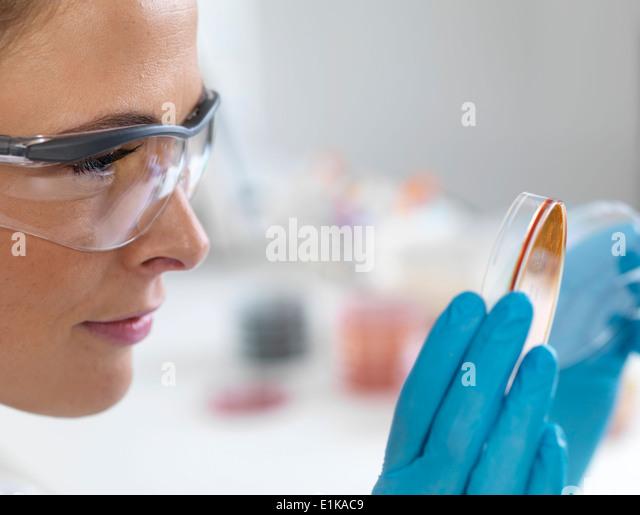 Female scientist holding petri dish with biological cultures. - Stock-Bilder
