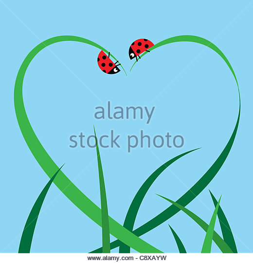 Blades of grass and ladybugs forming heart shape - Stock Image