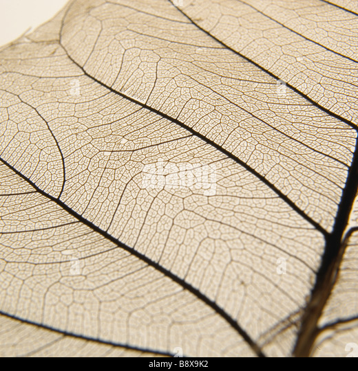 A macro detailed image of a leaf - Stock Image
