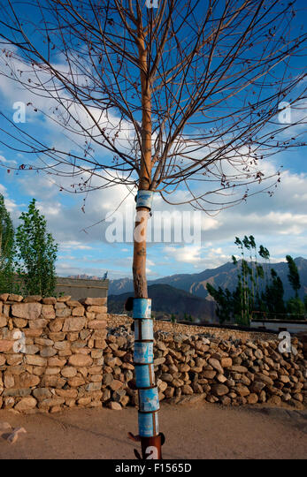 Cans giving trees protection and to prevent damage from animals, Ladakh, India - Stock Image