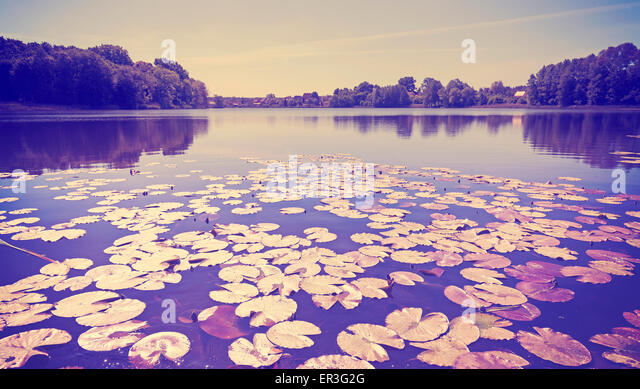 Vintage toned panoramic lake view with water lilies. - Stock-Bilder