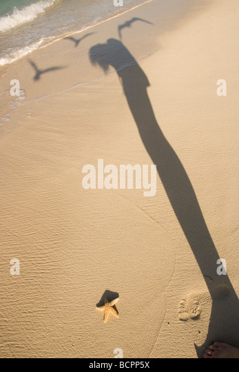photographer taking a picture of a starfish on the beach, shadow of person and three seagulls flying overhead - Stock Image
